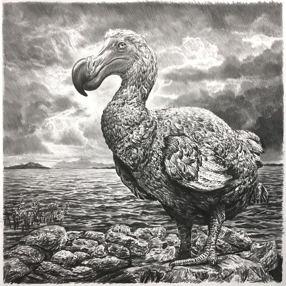 dodo ii